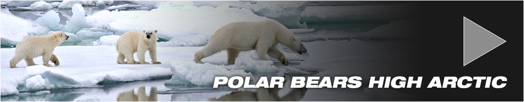 Arctic Polar Bear package tours