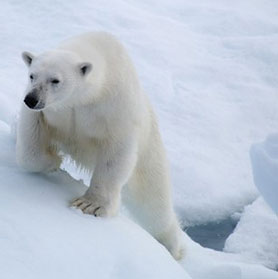 arctic wildlife package tours