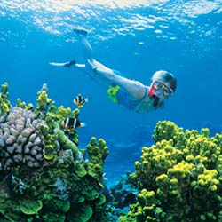 250px_X_250px_barrier_reef01